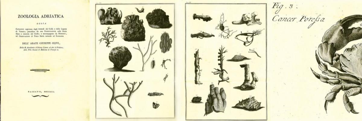 immagini libro di giuseppe olivi