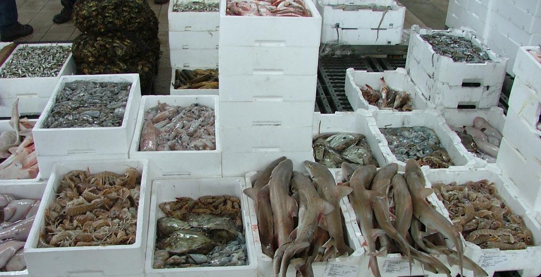 mercato ittico di chioggia